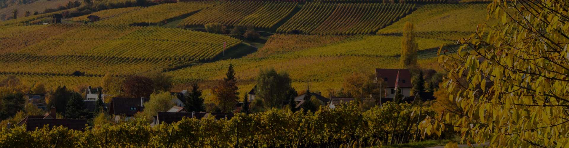 Weingut Gasser